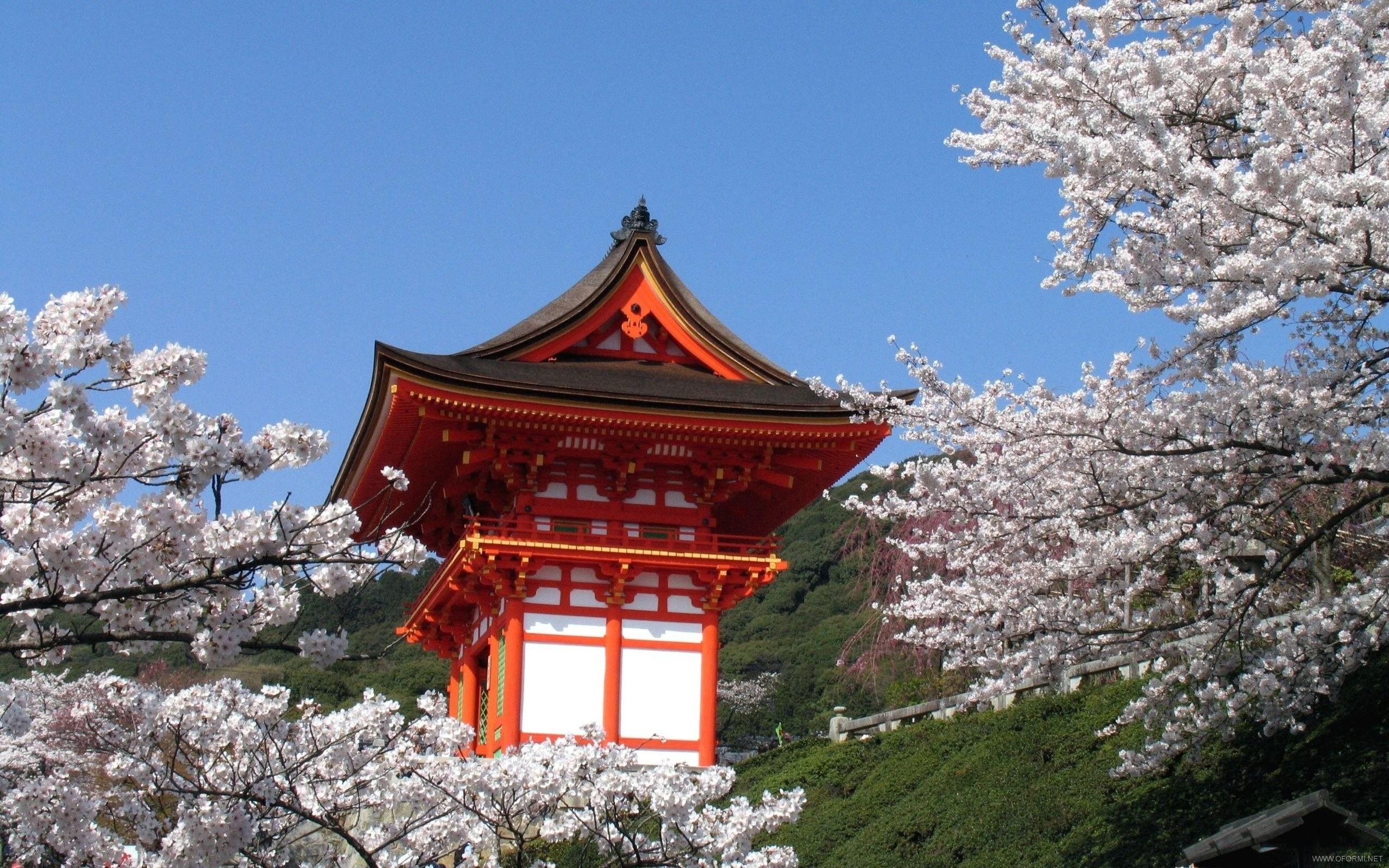 Культура древней японии реферат 4233